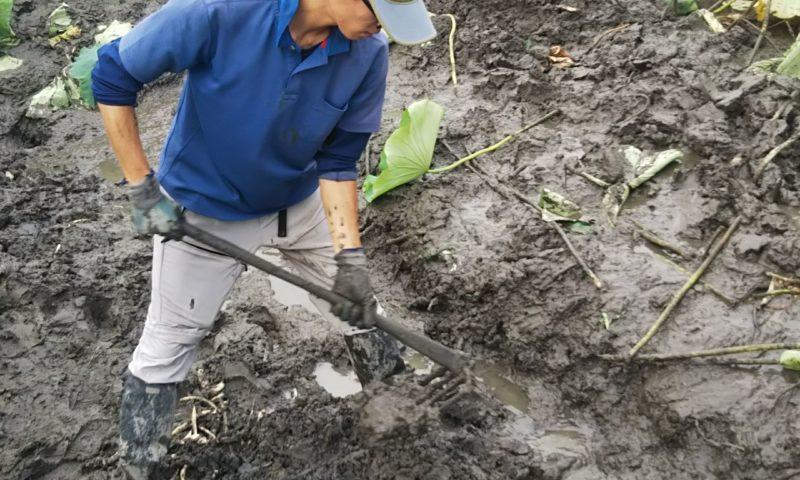 鍬掘り品種へのこだわり