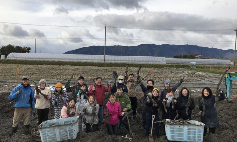 蓮根掘り体験ツアー